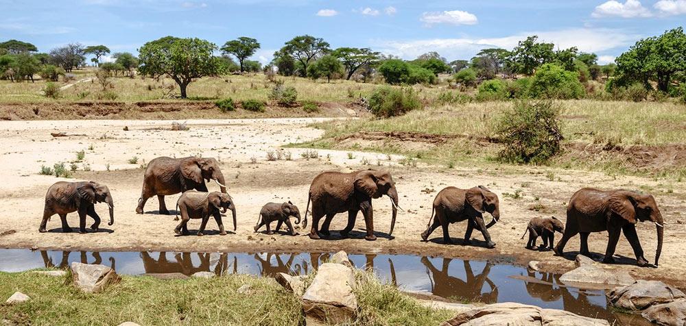 Social Travel Africa